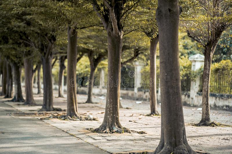 Green Trees on Road royalty free stock photos