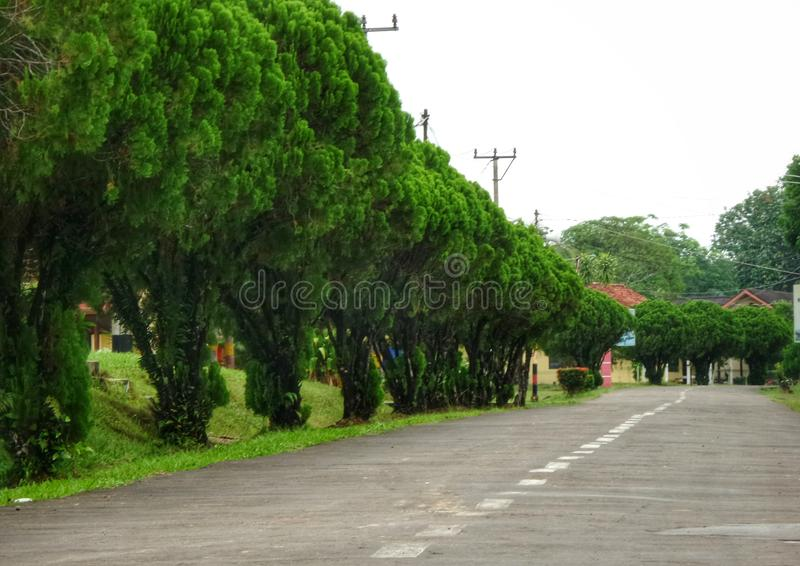 Green trees on the roadside. Function as air pollution absorbers and can also make the streets more beautiful royalty free stock images