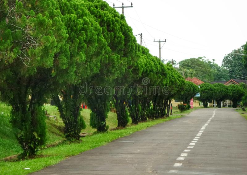 Green trees on the roadside. Function as air pollution absorbers and can also make the streets more beautiful and healty stock image