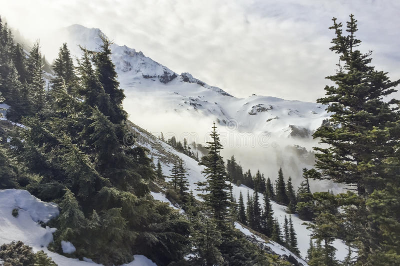 Green Trees On Snowy Mountains Free Public Domain Cc0 Image