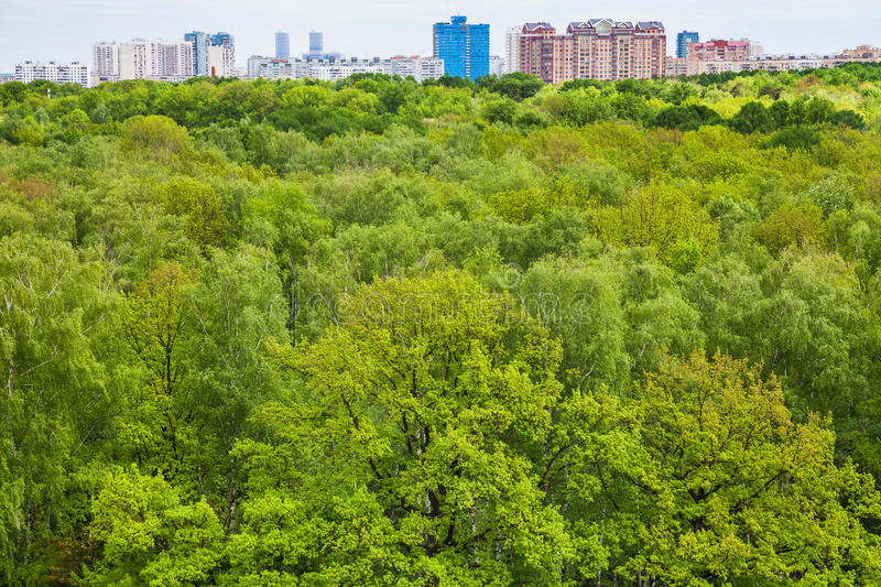 Green trees in summer forest and urban houses stock images