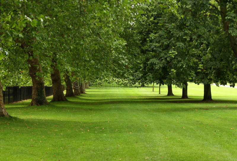 Green Trees in Summer. Parallel rows of sycamore and horse chestnut trees in full leaf on a windy summer's day in a green public park royalty free stock photos