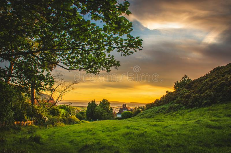 Green Trees Under Blue and Orange Sky during Sunset stock image