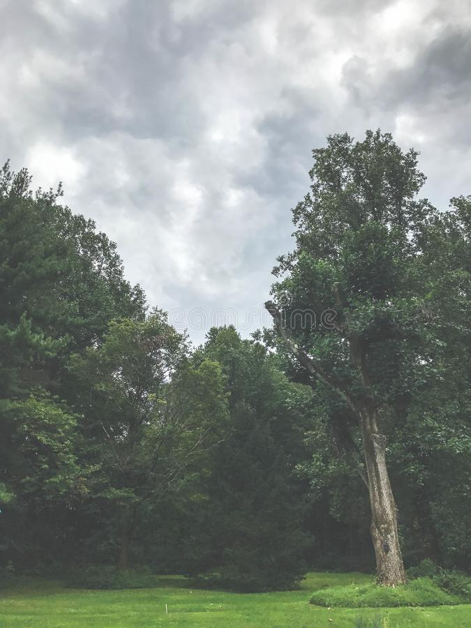 Green Trees Under the Cloudy Sky stock image