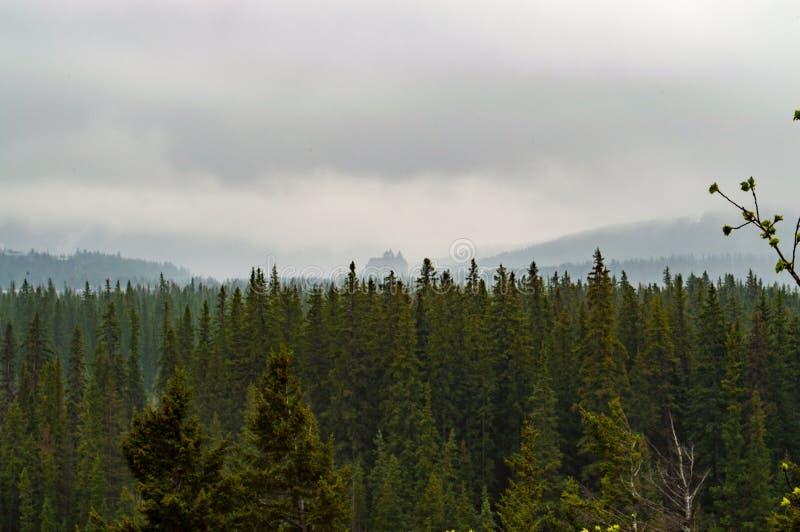 Green Trees Under Nimbus Clouds Free Public Domain Cc0 Image