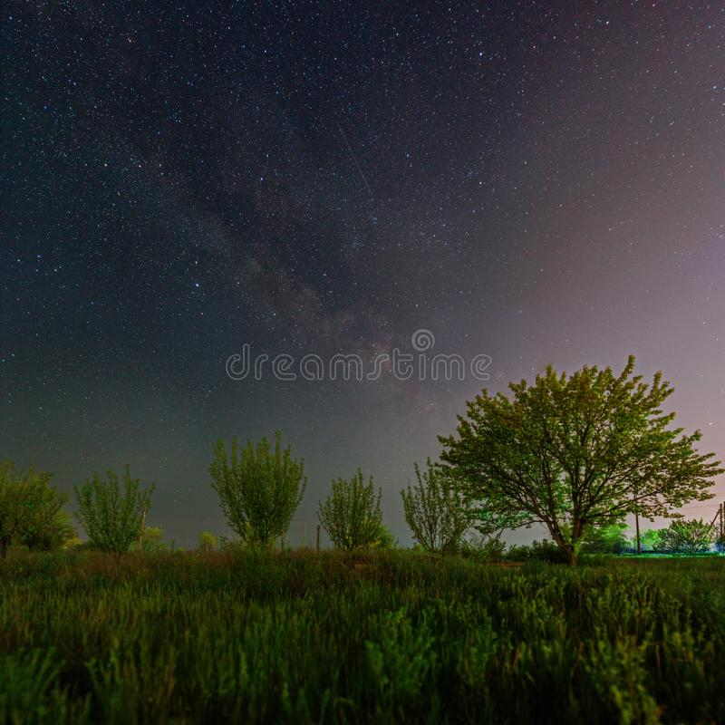 Green trees under the starry sky and Milky Way. Milky Way galaxy over the young trees. Spring vegetation under the starry night sky. Night landscape in Kriviy royalty free stock photo