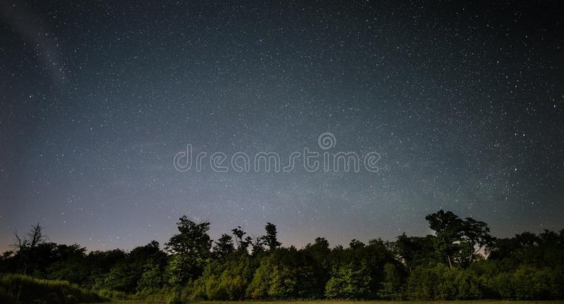 Green Trees Under Starry Sky During Nighttime Free Public Domain Cc0 Image