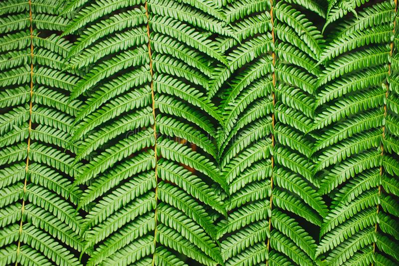 Green tropical background. Perfect fern leaves texture. Abstract lines in nature. Geometric figure. Nature concept, horizontal banner stock photo