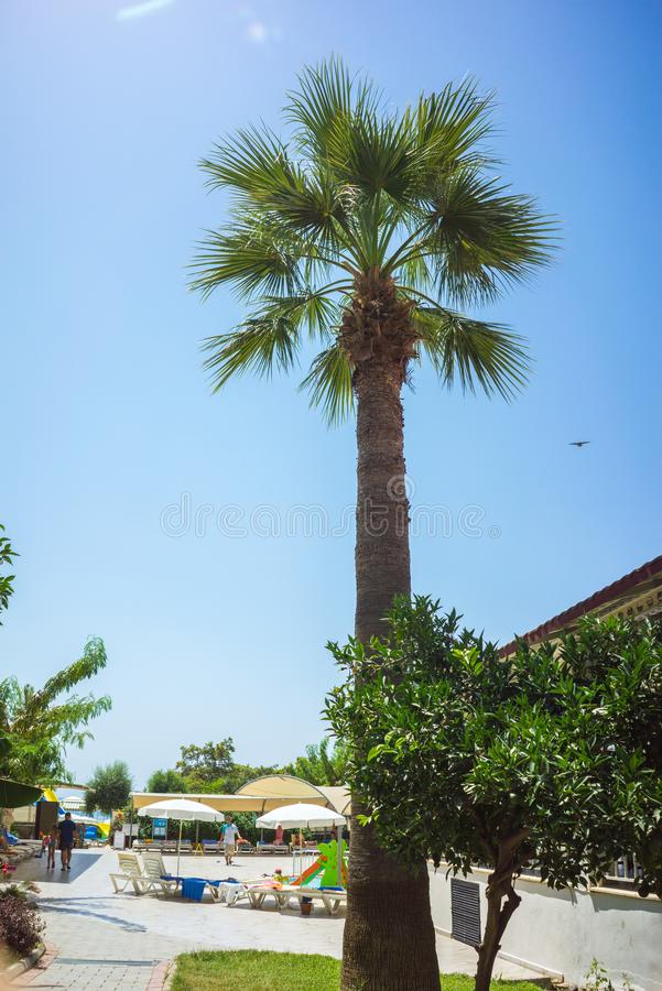 Green Tropical Coconut Palm Trees in the Blue Sunny Sky royalty free stock image