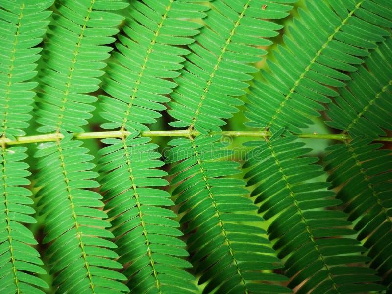 Green tropical fern leaf background stock photos