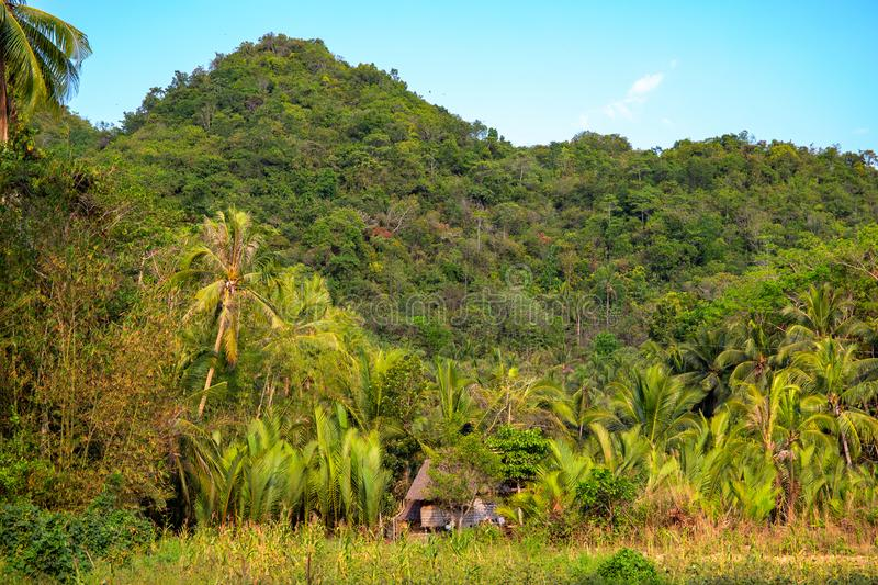Green tropical landscape with a mountain and coco palm tree forest. Tropical jungle landscape. Natural environment royalty free stock image