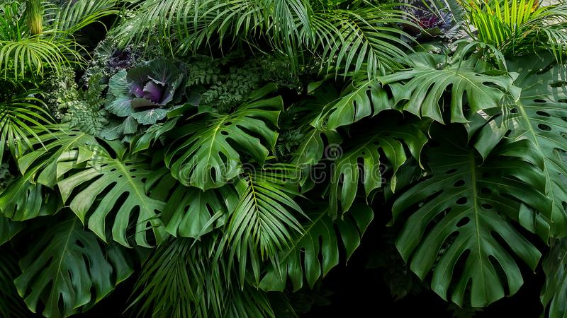 Green tropical leaves of Monstera, fern, and palm fronds the rainforest foliage plant bush floral arrangement on dark royalty free stock photos