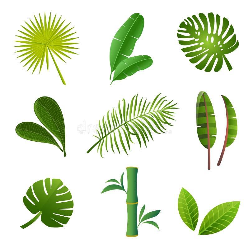 Green tropical leaves set. Tropical plants set. Tropical plants set. Vector illustration of green leaves of Strelitzia, banana, monstera, frangipani, bamboo and royalty free illustration