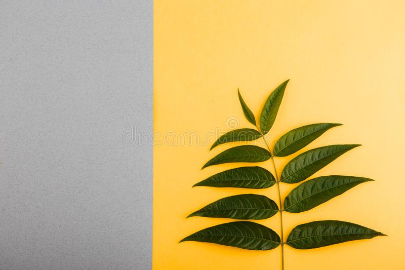 Green tropical leaves on a yellow-gray background. Minimal style design with plants. Abstract background stock image