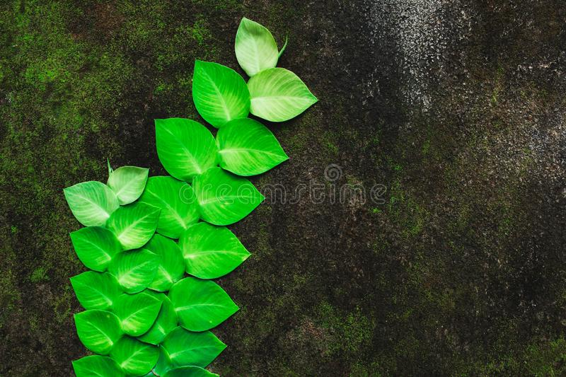 Green tropical plant growing on background of concrete wall with moss texture stock image