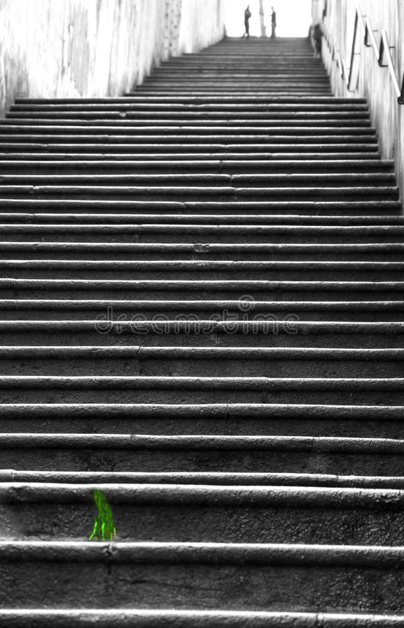 Green tuft of grass along the long ladders. Of monte berico royalty free stock photography