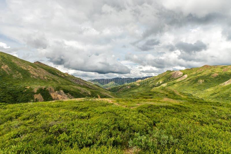 The Vast Green Tundra Scene Found in Alaska`s Denali National Park. The green tundra plants cover the vast landscape of Alaska`s Denali National Park royalty free stock images
