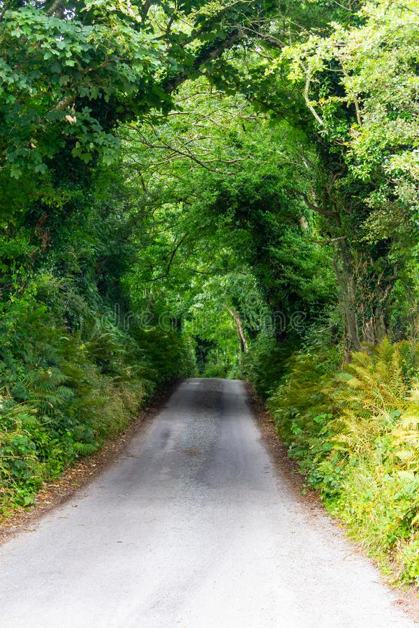 Green tunnel in Greenway route from Castlebar to Westport. Ireland royalty free stock photos