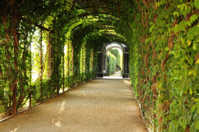 The green tunnel royalty free stock photo