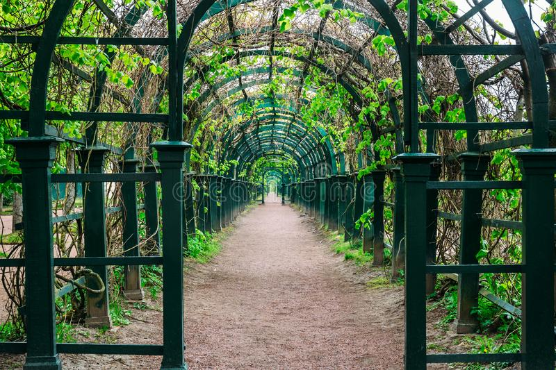 Green tunnel in spring park foliage, natural arch walkway stock photos