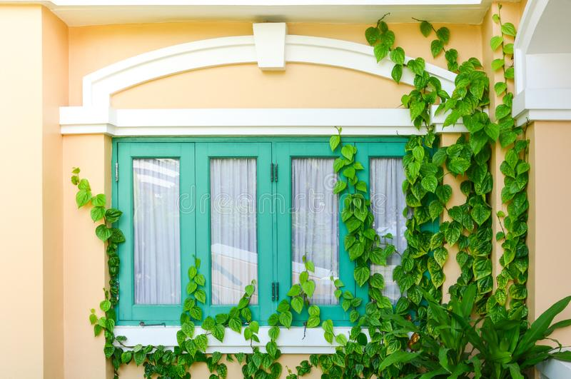 Green turquoise window and yellow wall in chino-portuguese style with green ivy royalty free stock images