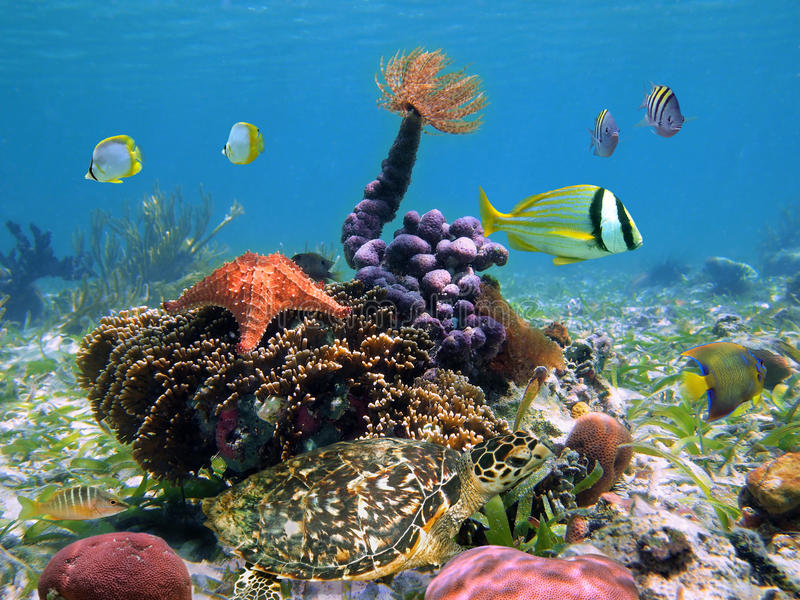 Turtle with colorful marine life royalty free stock photos