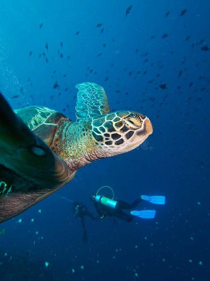 Free Green Turtle & Divers Stock Photo - 33093230