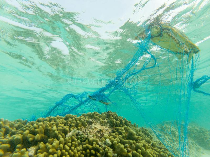 Green turtle and a discarded fishing net. Green turtle entangles on a discarded fishing net and struggling to death royalty free stock image