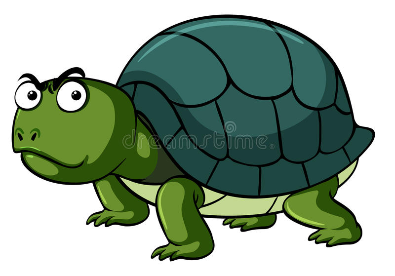 Face Turtle Stock Illustrations 640 Face Turtle Stock