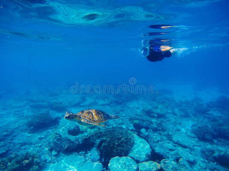 Green turtle with swimming woman in full face mask and snorkeling wear. royalty free stock photography
