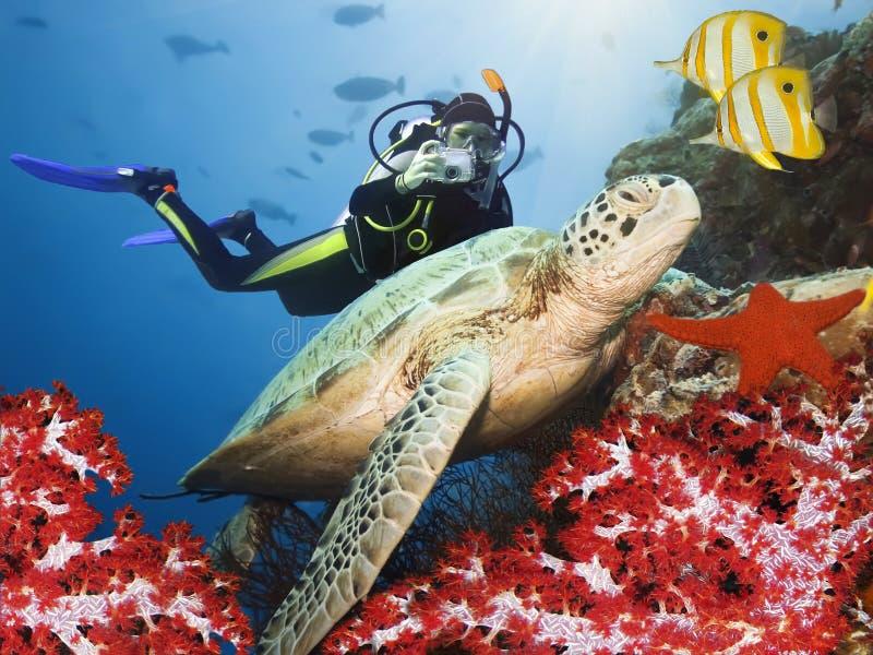 Green turtle underwater. On a coral. Sipadan. Celebes sea