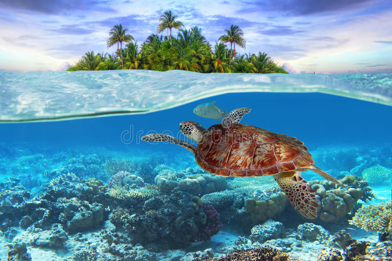 Green turtle underwater. At the tropical island stock photos