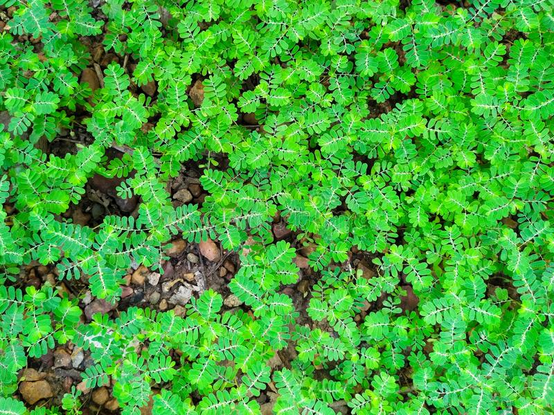 Green unwanted flora on ground. Closeup, green nature background royalty free stock photography