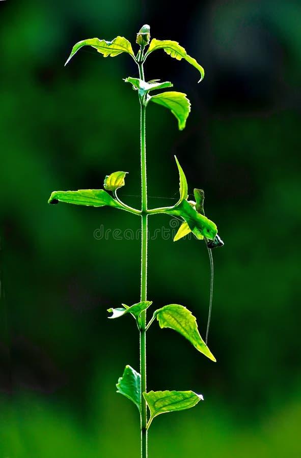 green växten arkivbilder
