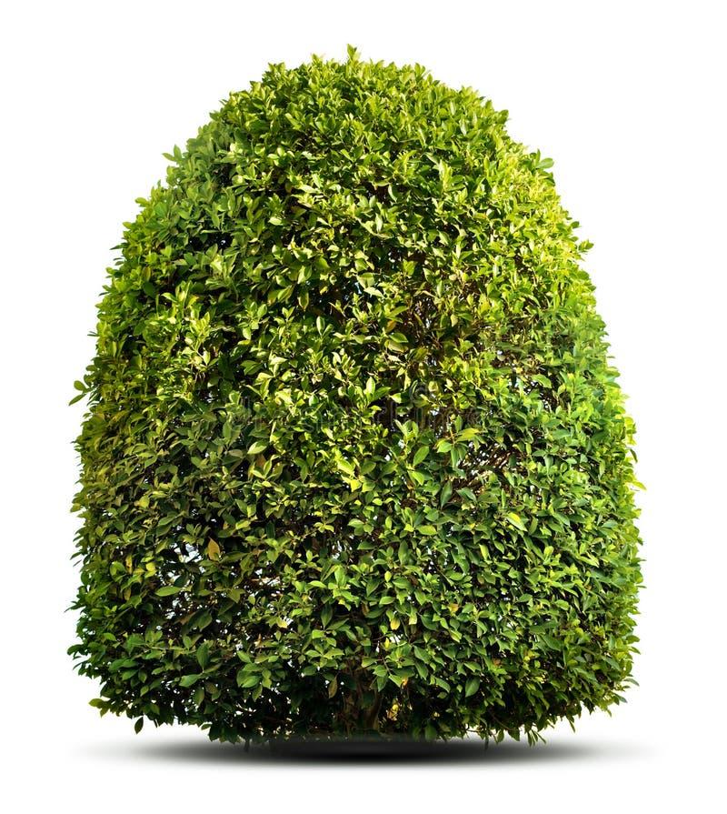 green växten arkivfoto