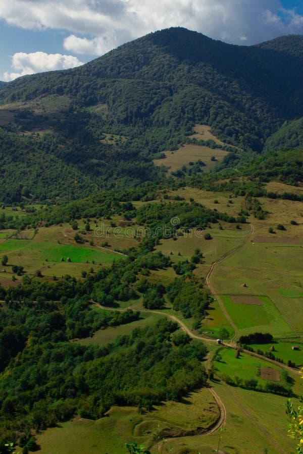 Green valley. Of Carpathian mountains stock photo