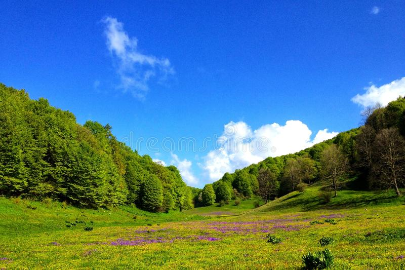 Beautiful nature. Green valley in high mauntans royalty free stock images