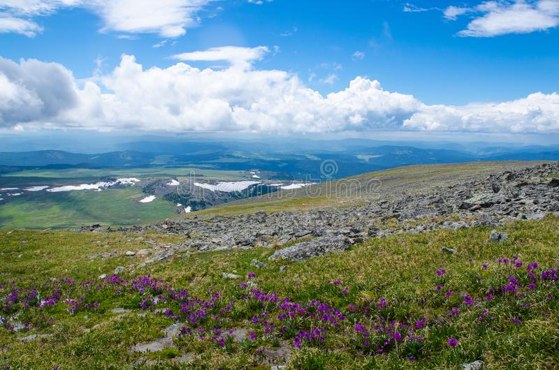 Green valley high on the mountains with the view to clear sky in summer day is spangled with blooming flowers stock images
