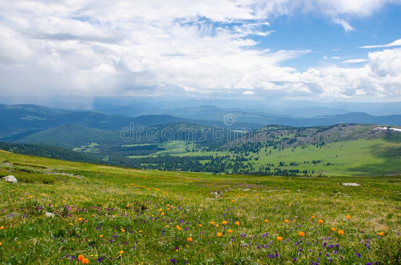 Green valley high on the mountains with the view to clear sky in summer day is spangled with blooming flowers stock image