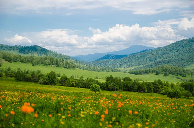 Green valley high on the mountains with the view to clear sky in summer day is spangled with blooming flowers Summer landscape, Al stock photo