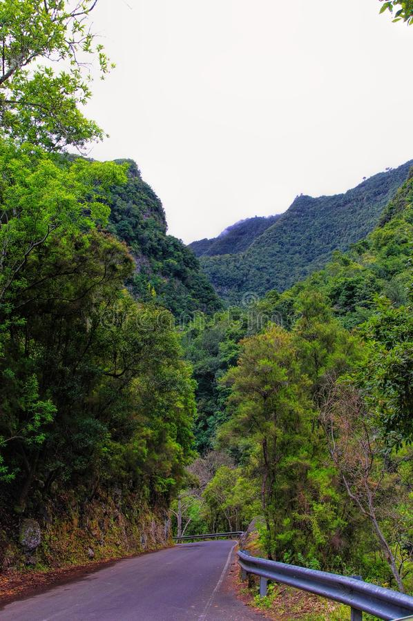 Green valley on La Palma island royalty free stock images