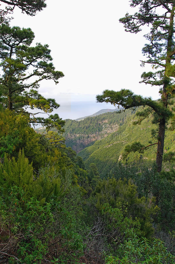 Green valley on La Palma island royalty free stock photos