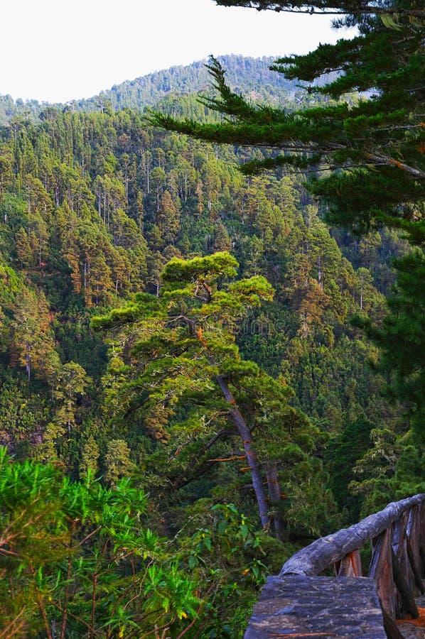 Green valley on La Palma island stock photography