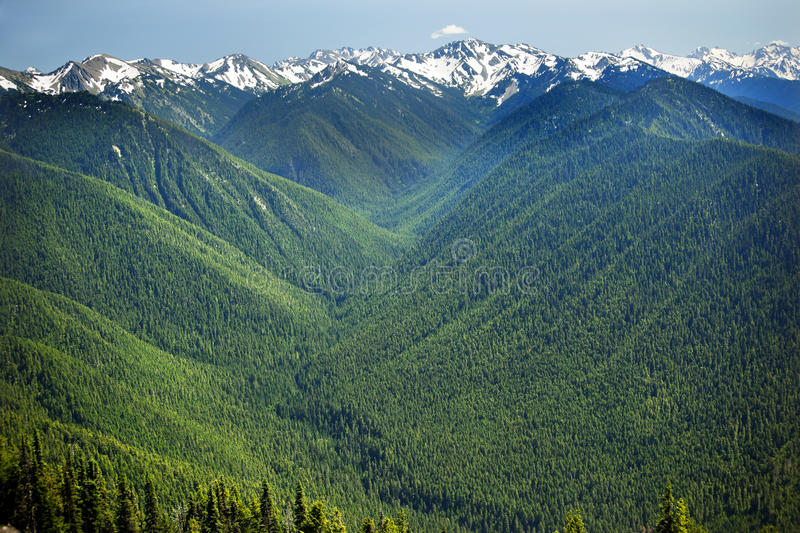 Green Valleys Snow Mountains Hurricane Ridge. Green Valleys Evergreens, Snow Mountains Hurricane Ridge Olympic National Park Washington State Pacific Northwest royalty free stock photo