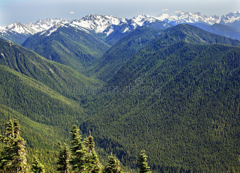Green Valleys Snow Mountains Hurricane Ridge. Green Valleys Evergreens, Snow Mountains Hurricane Ridge Olympic National Park Washington State Pacific Northwest stock image