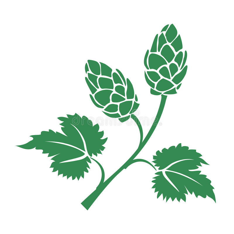 Green vector hops icon. Green vector silhouette hops icon with leaves and cone like flowers used in the brewing industry to add the bitter taste to beer stock illustration