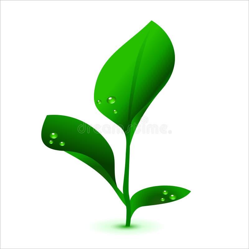 Download Green Vector Plant, No Mash Stock Vector - Image: 8580750