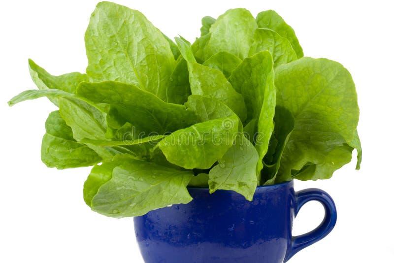 Download Green vegetable stock image. Image of vegetable, color - 22241739