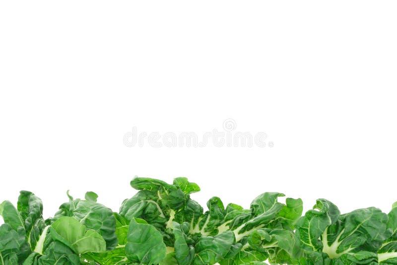 Green vegetable border stock image