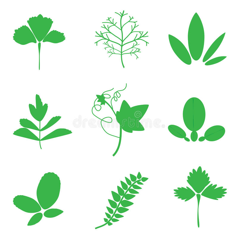 Green vegetable leave stock illustration